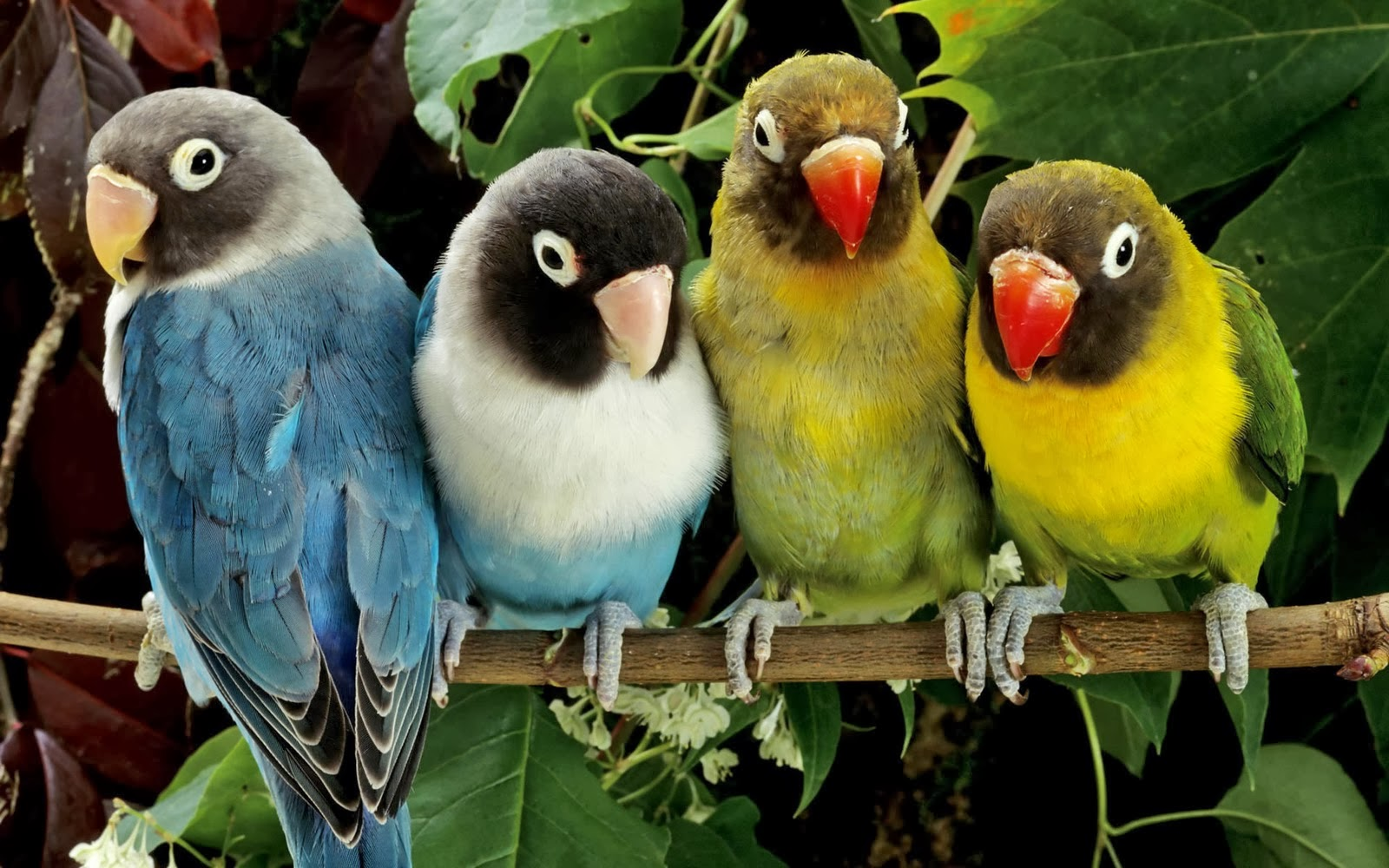 birds hd wallpapers free down load ~ hd wallpapers free download