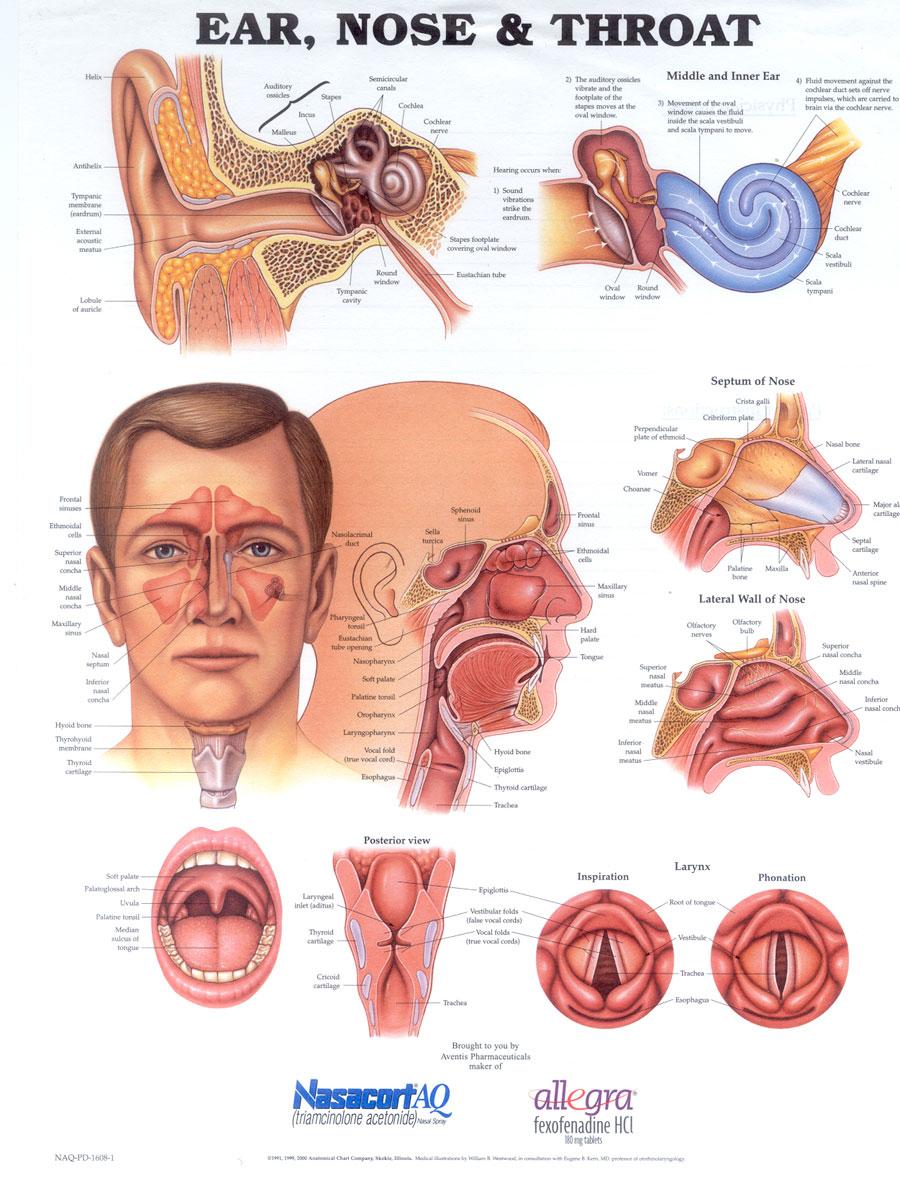 swollen vocal cords acid reflux