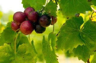 vitamin ANTI PENUAAN & ANTI KANSER