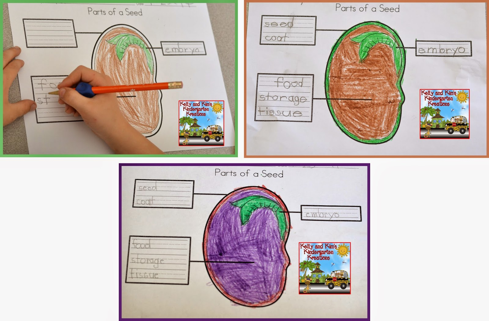 Kelly and Kim s Kindergarten Kreations Springing into Science Blog Hop w