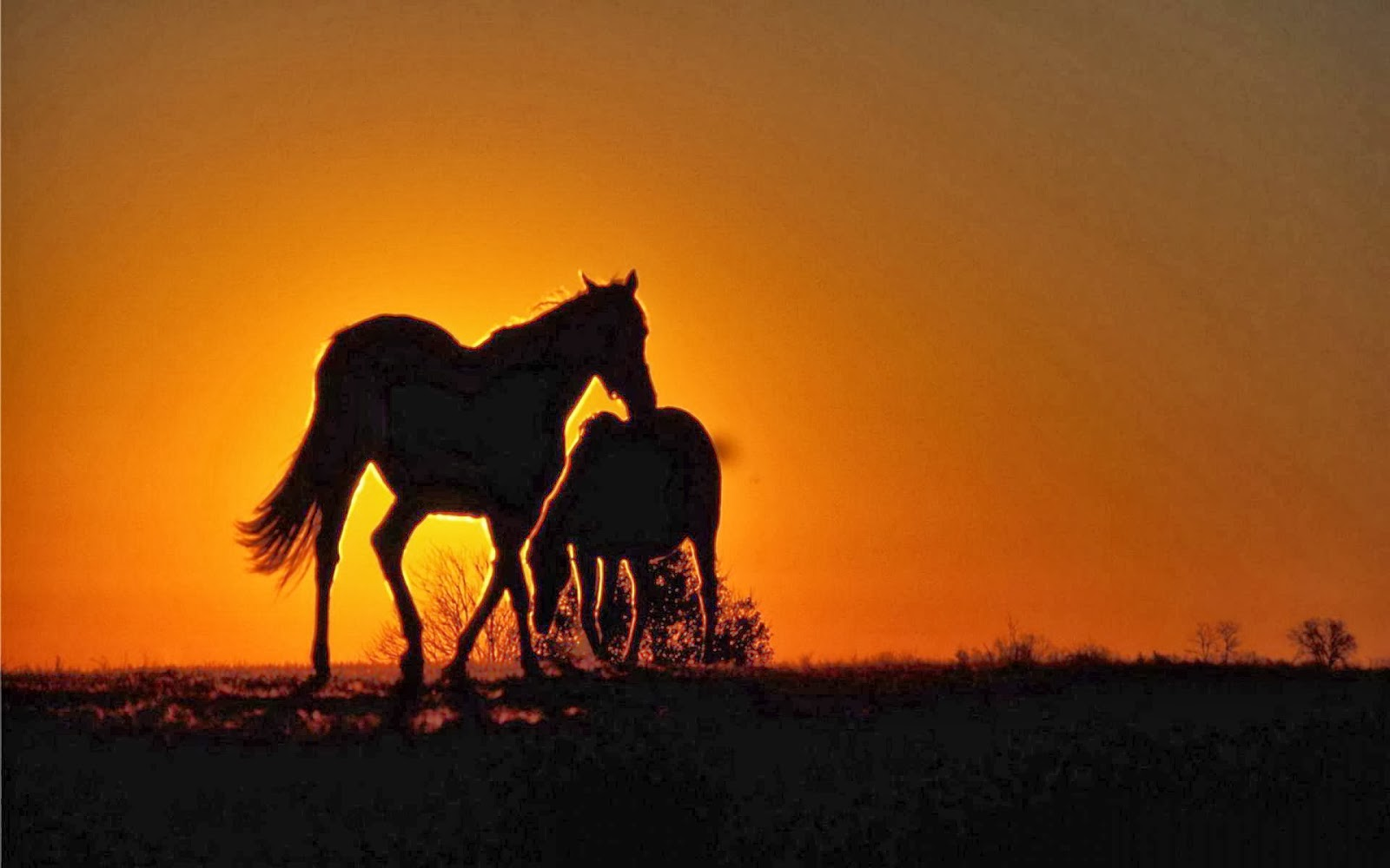 Top   Wallpaper Horse Sunrise - 424005  Perfect Image Reference_295434.jpg
