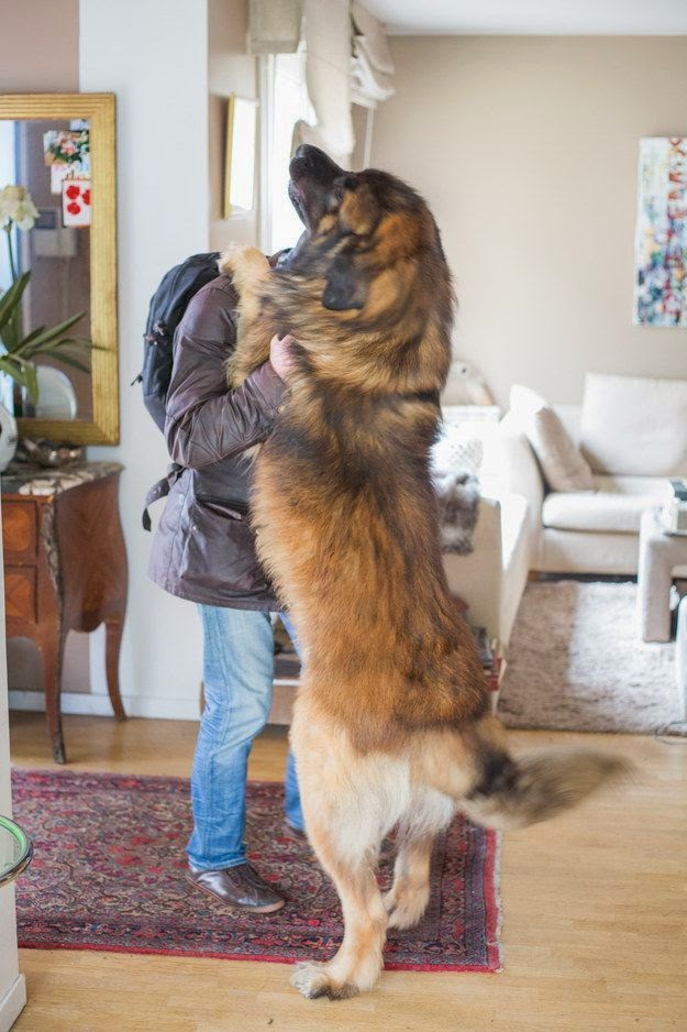 3 Amazing Big dogs