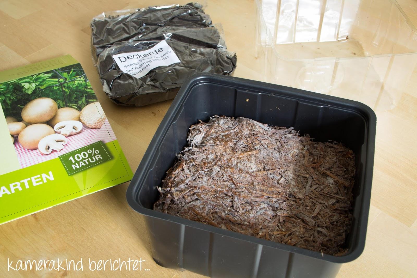 Pilze selber züchten leicht gemacht