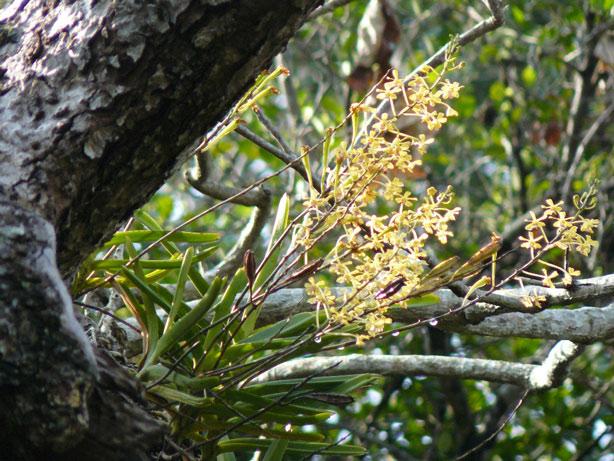 http://1.bp.blogspot.com/-s-JeY9znmn8/Tc_DSN7I83I/AAAAAAAABdk/HTmoNAg-WB8/s1600/testacea-tree.jpg