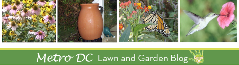 Metro DC Lawn and Garden Blog