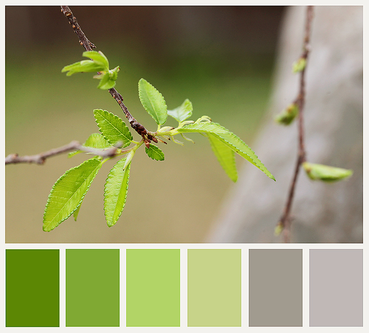 Green Leaf Color Schemes | Green Leaf Color Combinations | Green ...