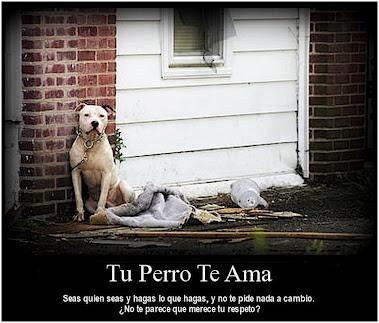 Tu perro te ama :')