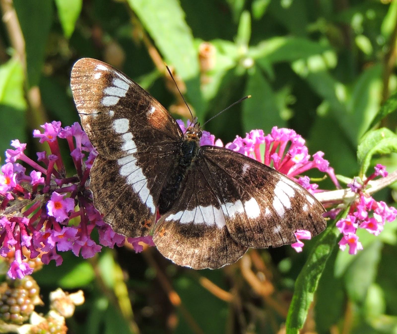 Camberwell Butterflies - Caterpillar EP