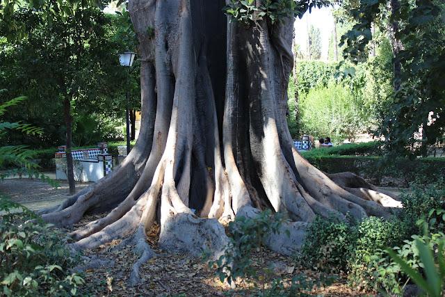big roots