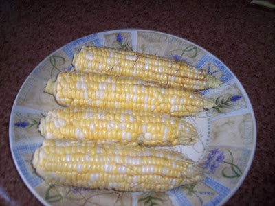 Harvested ears of corn