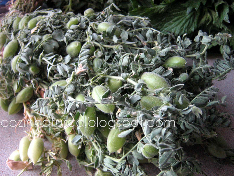 Grão-de-Bico Verde (Yeşil Nohut)