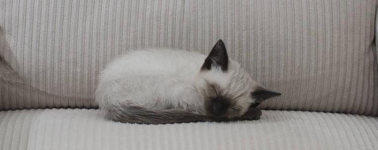 Фото котенка спящего в кресле