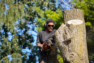 Tree Service and Removal with a Chainsaw