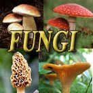 Mycological Notes