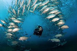scuba diving in Nusa Lembongan, diving in Padang Bai,