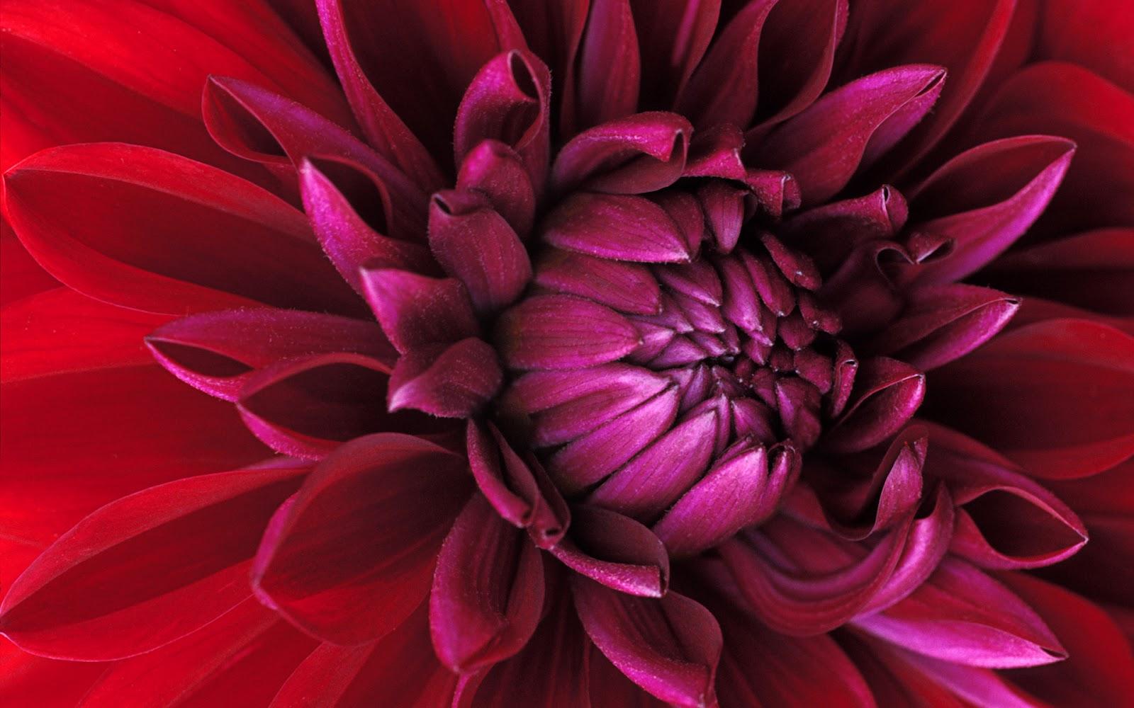 Digital high defination 3d window 7 hd wallpapers 3d - Flower wallpaper 3d pic ...
