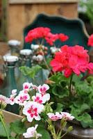 Garden Lovers ♥ Club ... ZONINDELNING av Bloggare med Odling eller Grön Inspiration