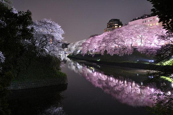 Dokumentasi Hanami Musim Semi di Jepang