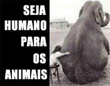 Seja humano para os animais