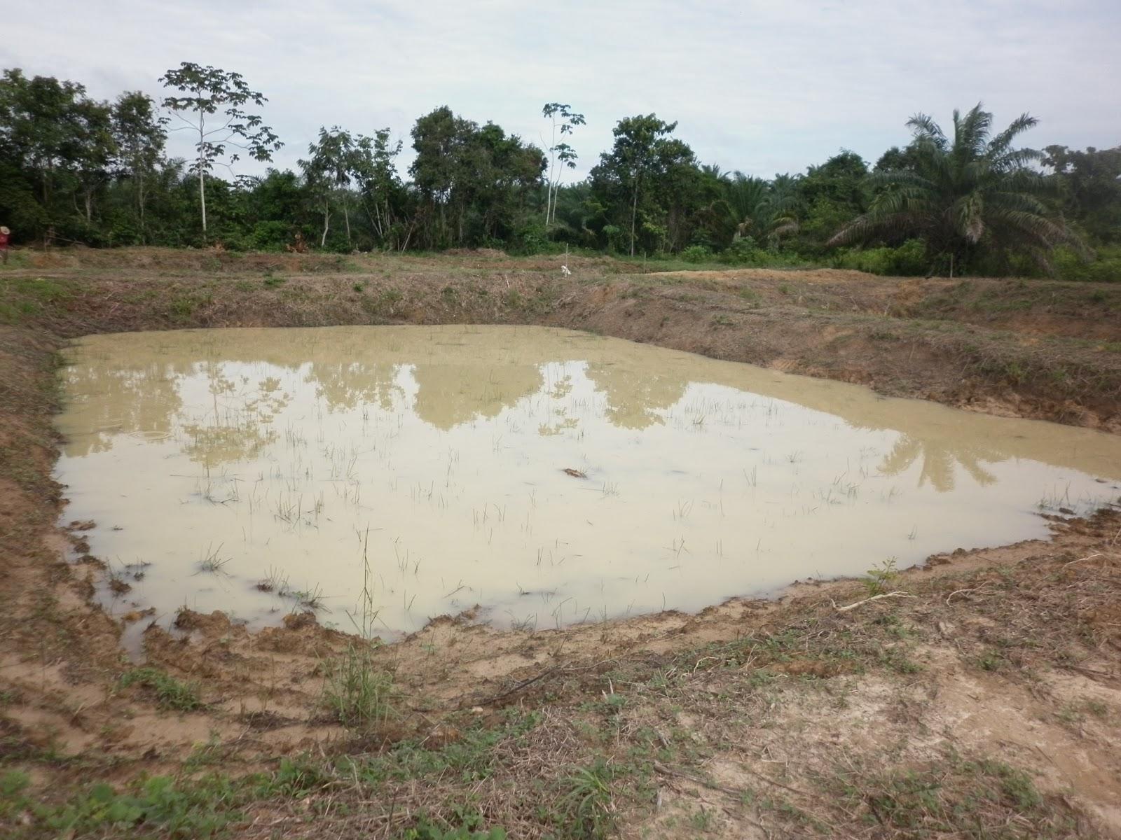 Emprendedores en piscicultra sena barrancabermeja u p for Elaboracion de estanques para piscicultura