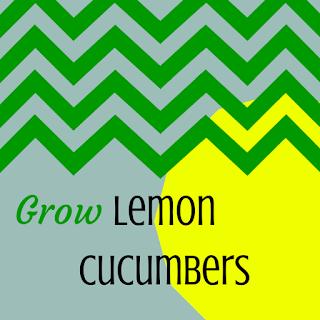 Growing Lemon Cucumbers