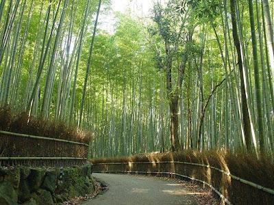 hutan bambu sagano7