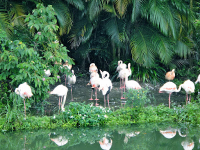 Pink flamingos Taipei Zoo Taiwan