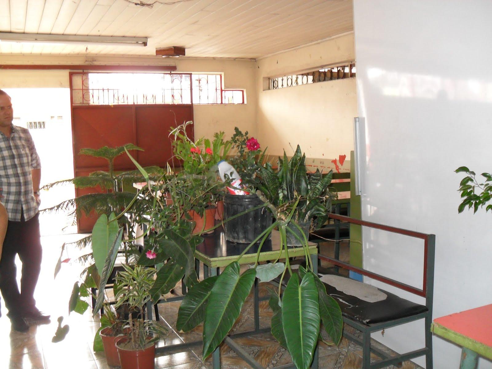 Mantenimiento y dise o de jardines charla manejo de for Diseno de plantas ornamentales