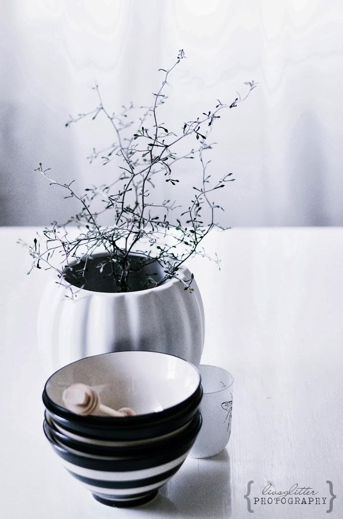 COROKIA COTONEASTER, sicksackbuske, sicksackväxt, kök,