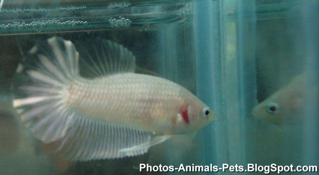 http://1.bp.blogspot.com/-s2ZZpQOG-4Y/TZs4Mhs-bUI/AAAAAAAAAa4/BlwboBmYhjY/s1600/fish+images+_0018.jpg
