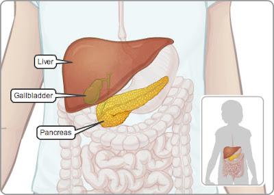 hati, empedu, dan pankreas
