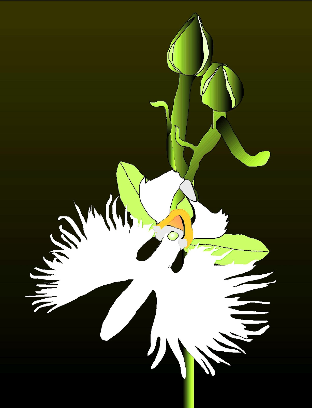 Salliesart white egret flower white egret flower mightylinksfo Image collections