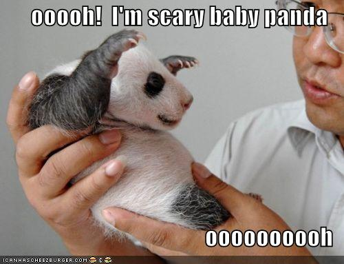 Funny Animals: March 2012