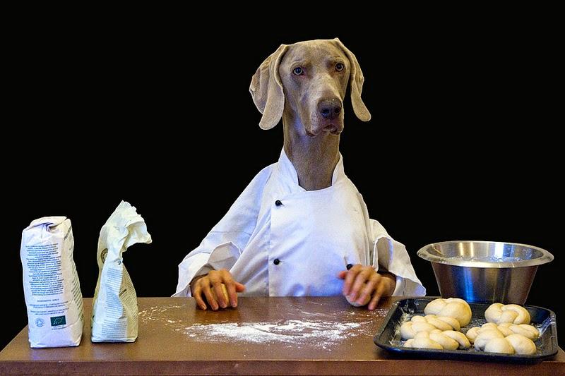 Cachorro pode comer pão?