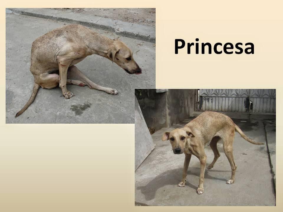 http://caesdejequie.blogspot.com.br/2013/05/princesa-guerreira.html
