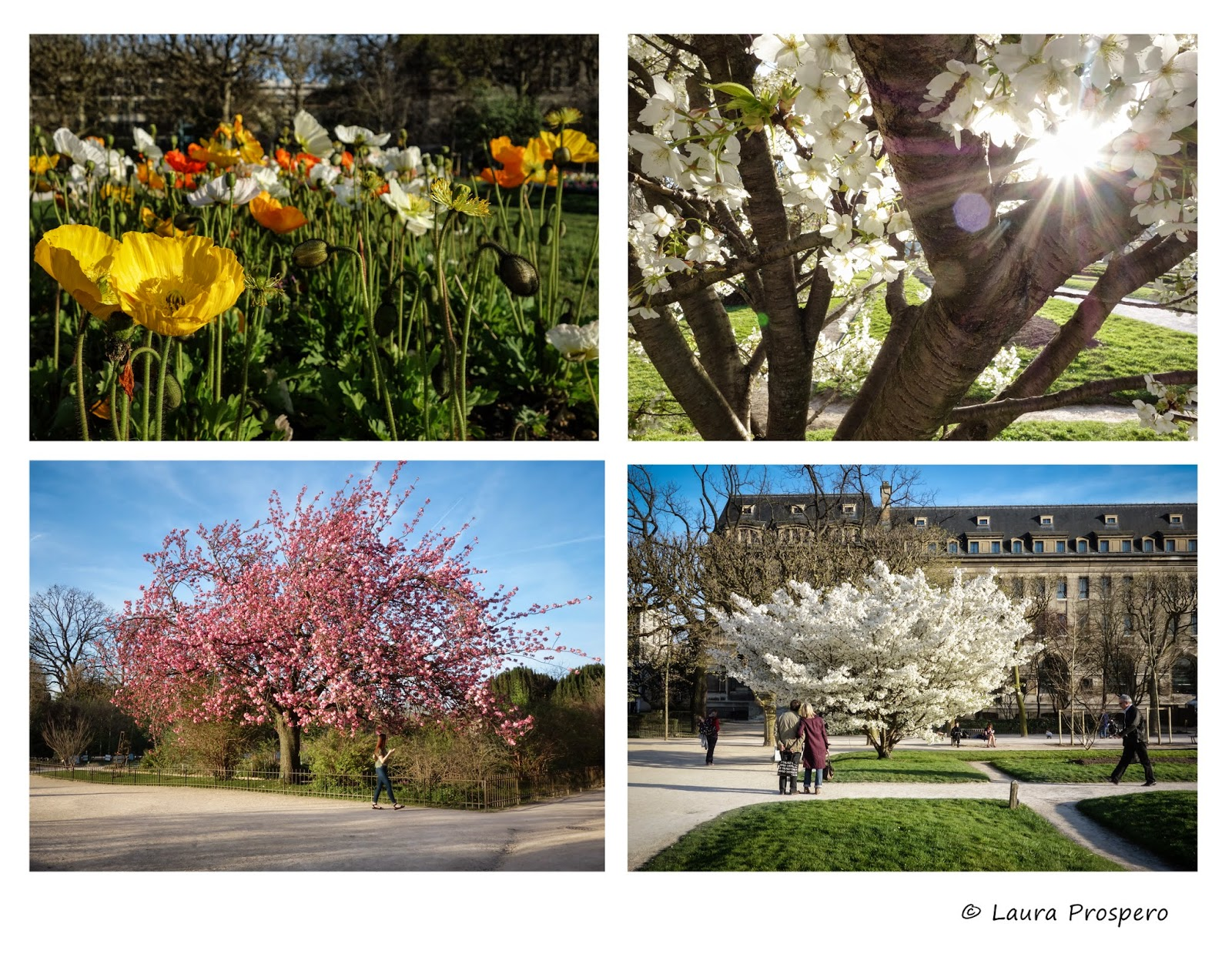 jardin des plantes - paris, avril 2015 © Laura Prospero