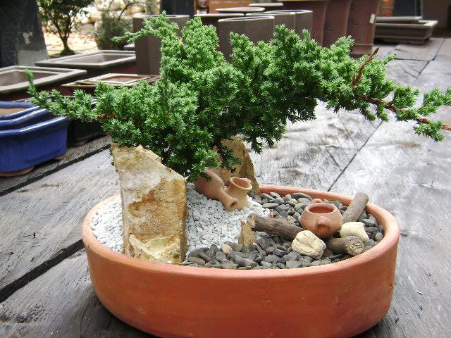 terrarios y bonsais de la tierra para ti