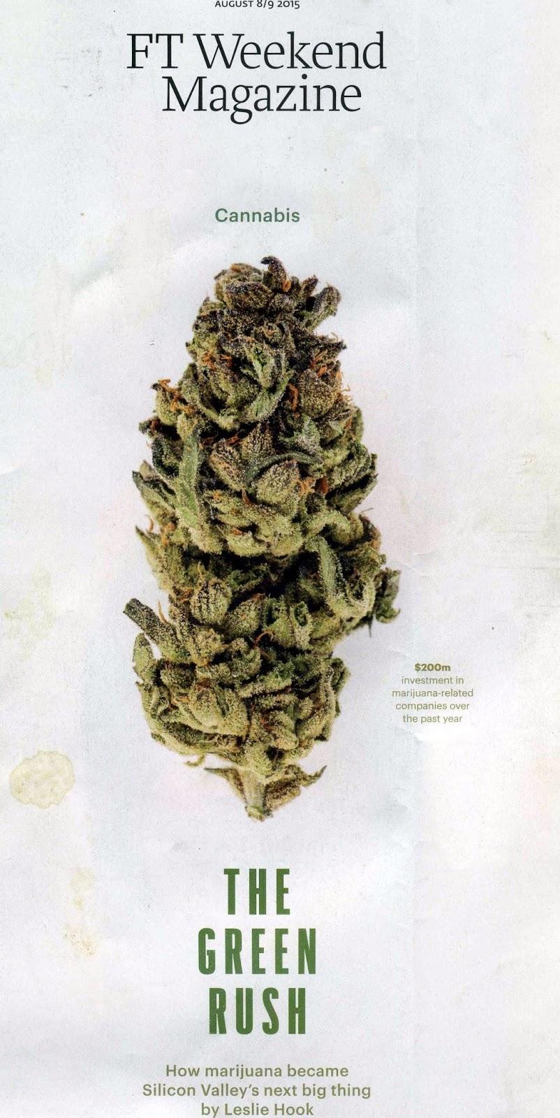 cannabis uruguay essay
