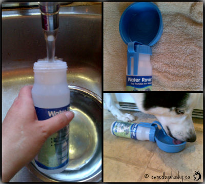 portable water container for dogs