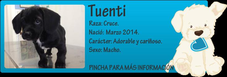 http://mirada-animal-toledo.blogspot.com.es/2014/05/tuenti-adorable-y-carinoso-cachorrete.html