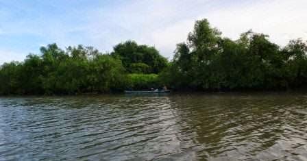 Hutan Mangrove wonorejo : tempat wisata alam di surabaya