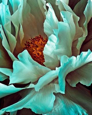 flores-cuadros