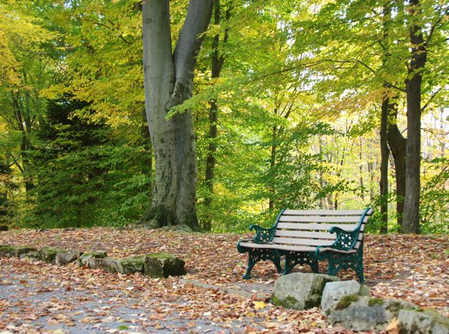 Autumn leaves and a bench in the park