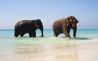 Elephants in Paradise HD Wallpaper