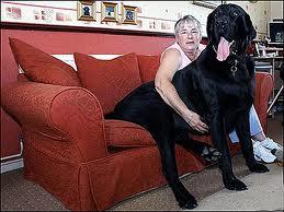 World's-Biggest-Dog-Pics-2