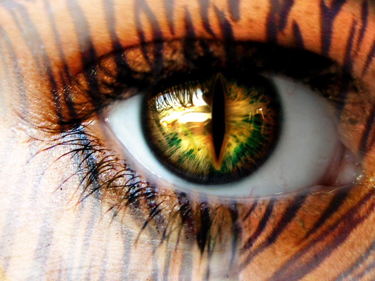 http://1.bp.blogspot.com/-s5zRLsdWMAY/T5T4T4L9QnI/AAAAAAAAF2Q/KtV-pXeV1a0/s1600/female-tiger-eye-wallpaper.jpg