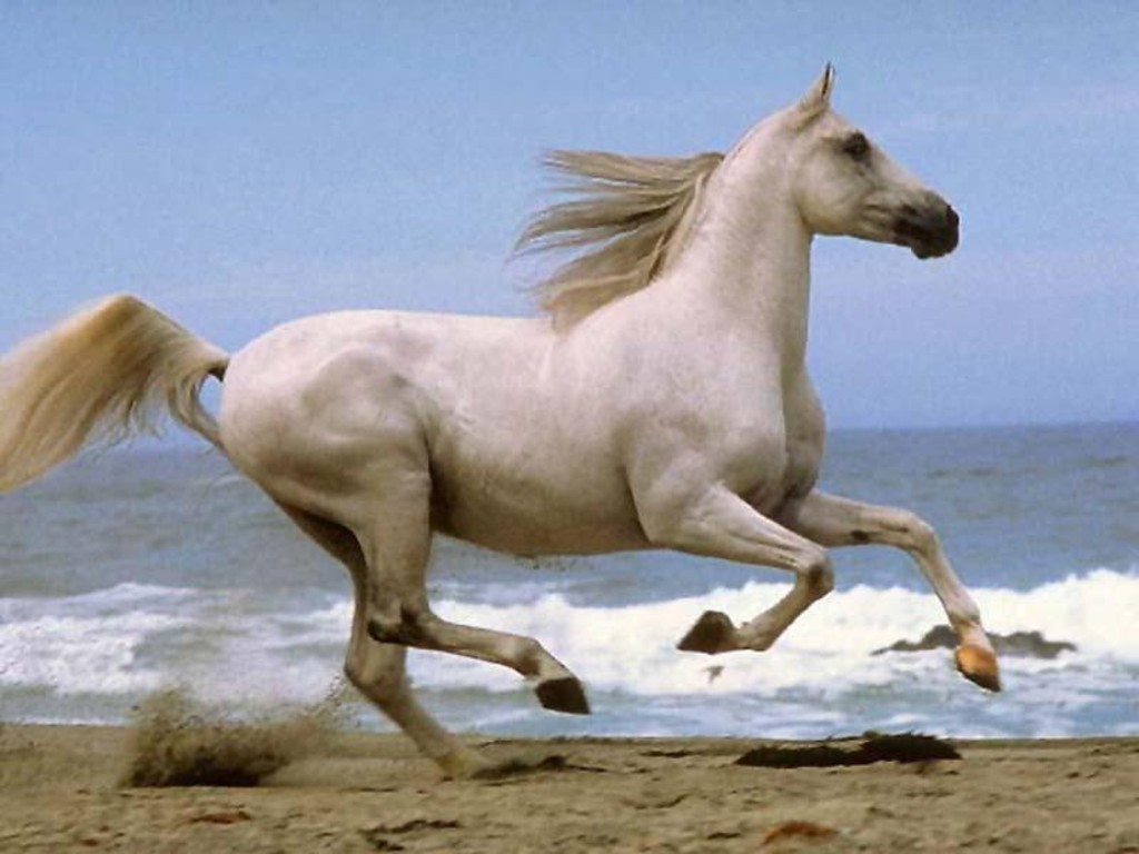 White running horses - photo#20