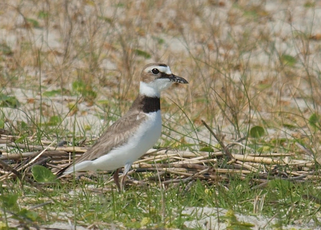 killdeer single guys By analyzing information on thousands of single family homes for sale in killdeer, north dakota and across the united states, we calculate home values .