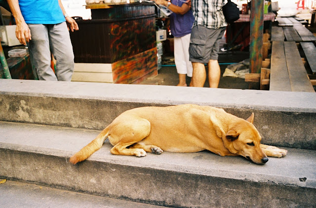 Color film Photography Bangkok of sleeping stray dog