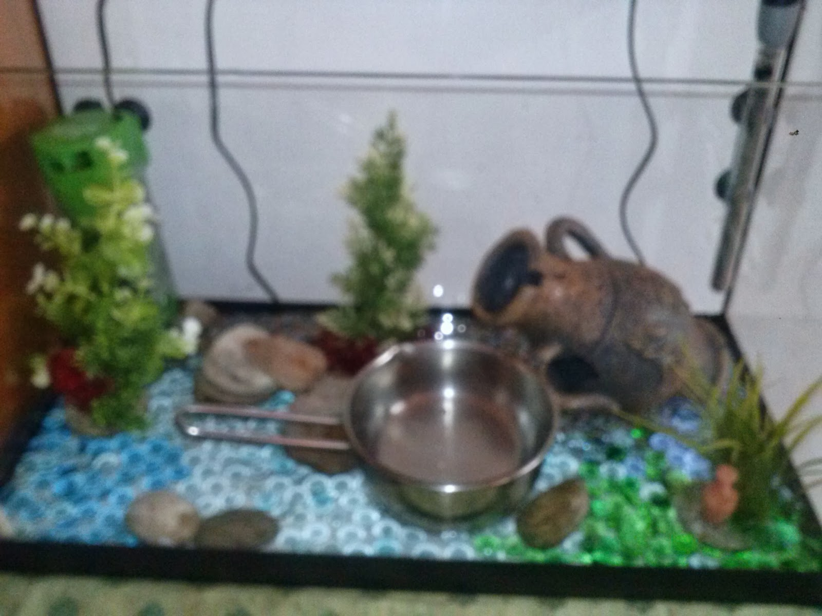 Barabao come allestire un acquario per pesci rossi for Pesci acquario